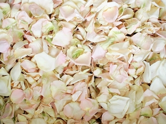 Blush and Ivory Rose Petals for Pathways