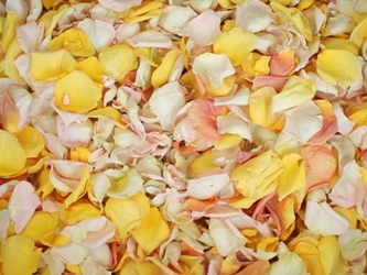 Ivory, Yellow, Blush, and Peach Rose Petals for Pathways