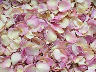 Pale Pink Rose Petals for Pathways