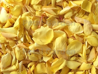 Yellow Blend Freeze Dried Rose Petals