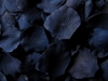 Navy Silk Floating Petals