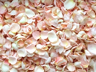 Specialty Freeze Dried Rose Petals